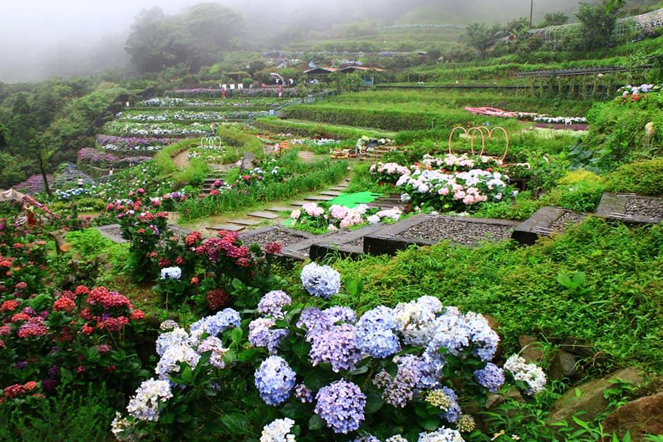 陽明山包車一日-遊繡球花季
